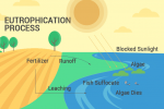 How Does Eutrophication Work? Causes, Process and Examples