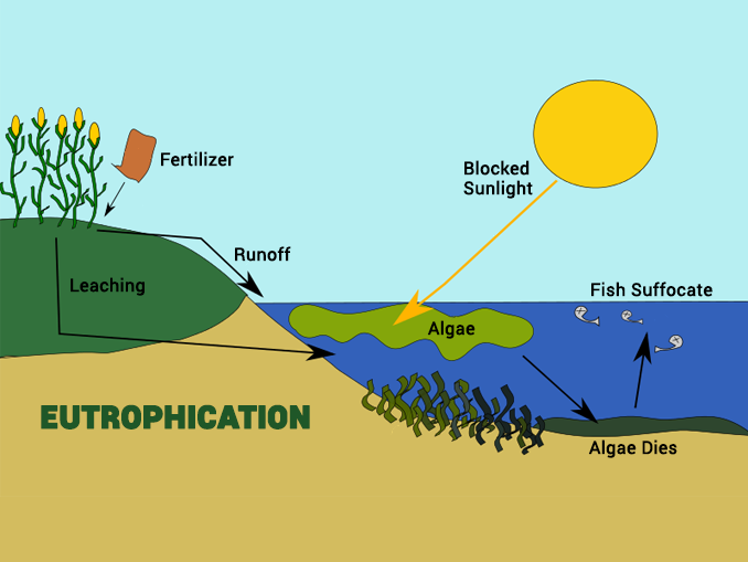How Does Eutrophication Work  Causes  Process And Examples