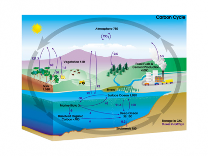 What Is the Carbon Cycle? Photosynthesis, Decomposition, Respiration and Combustion