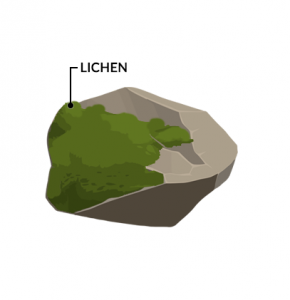 Biological Weathering Lichen