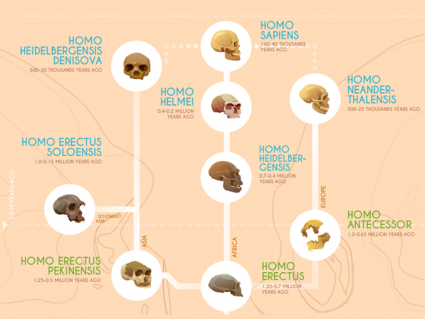 Human Evolution: A Timeline of Early Hominids [Infographic]