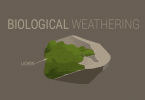 Biological Weathering: How Living Things Break Down Rocks