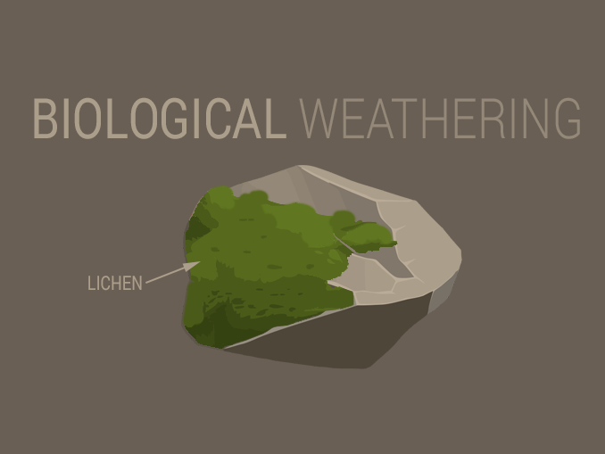 Biological Weathering