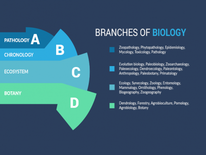 33 Branches of Biology: A Comprehensive Outline