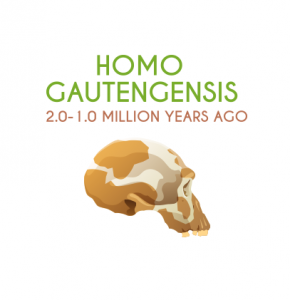Homo Gautengensis