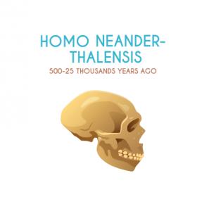 Homo Neander-thalensis
