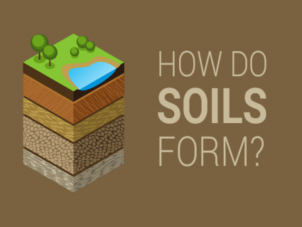 5 Soil Formation Factors: How Rocks Weather into Dirt