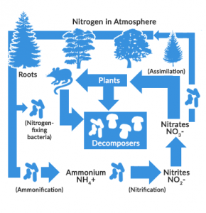 the 4 steps of nitrogen cycle the key to the food chain earth how