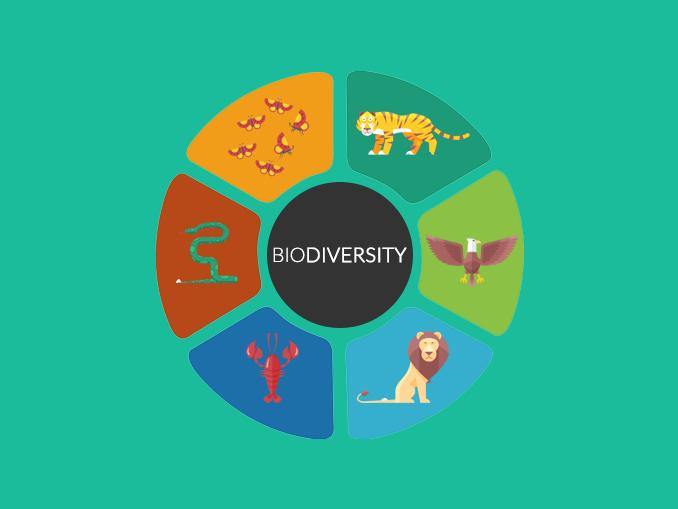 Biological Diversity Biodiversity