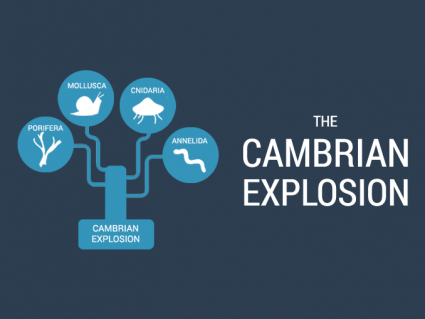 Cambrian Explosion: Life Diversification in the Oceans