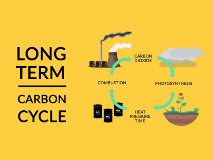 Long-Term Carbon Cycle: Carbon Dioxide to Hydrocarbons