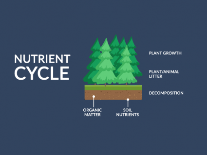 Nutrient Cycle: From Inorganic to Organic Material