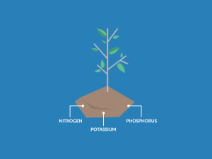 Soil Nutrients Deficiency and Replenishing