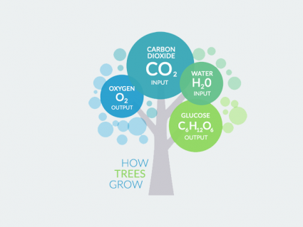 How Trees Grow from Carbon Dioxide and Water