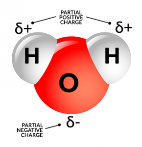 Water H2O Molecule Partial Polarity