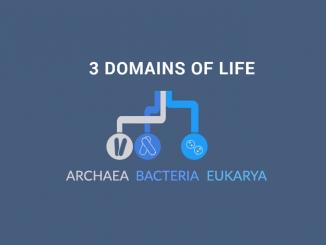 3 DOMAINS OF LIFE: Archaea, Bacteria and Eukarya