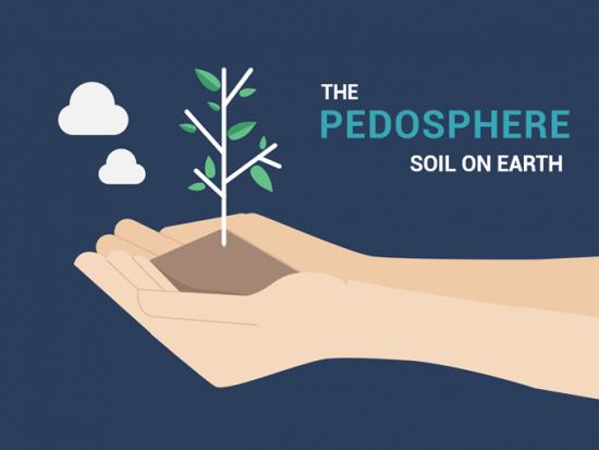 Pedosphere